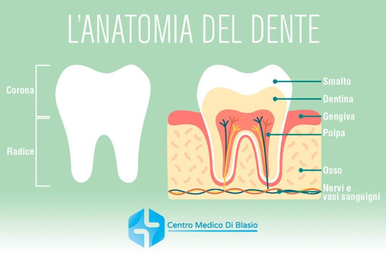 Come è fatto il dente? Anatomia del dente